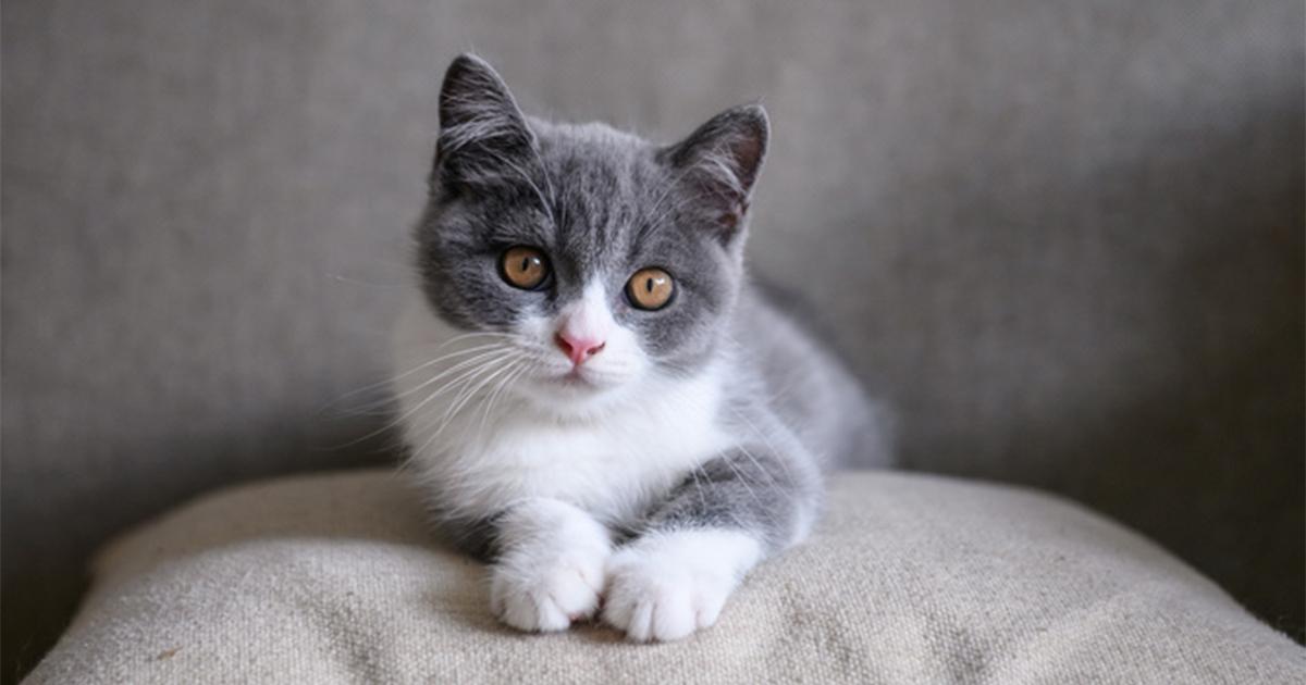 猫飼いあるある!猫がソファの前でじっとしている、猫なりの理由とは?