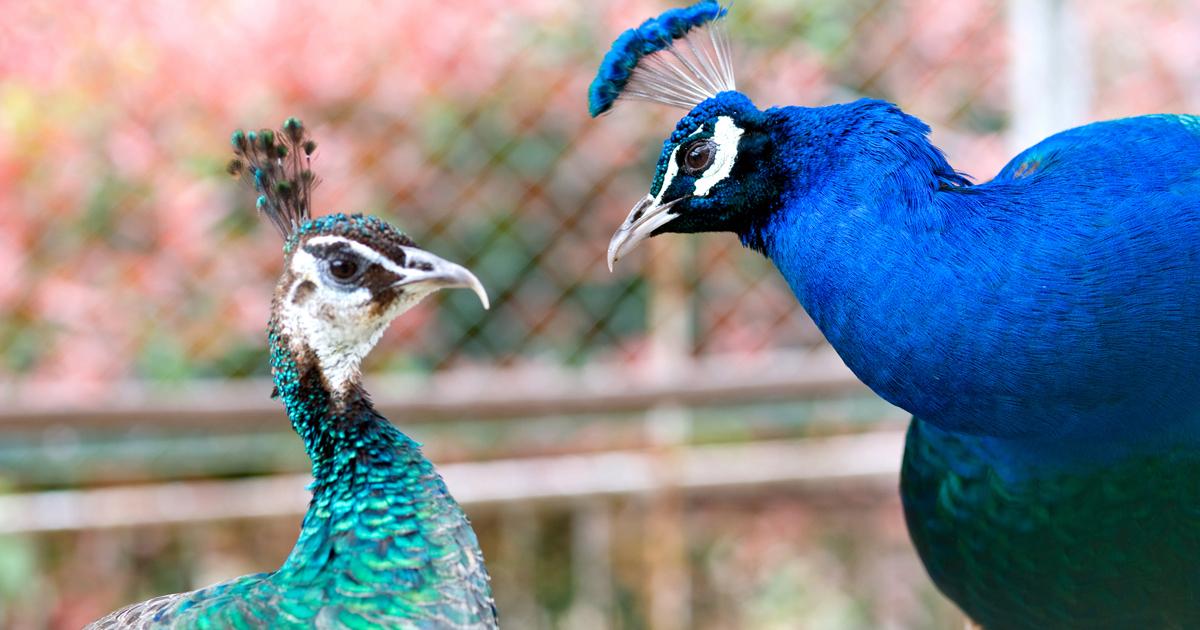 生物はなぜオスとメスの2種類に分かれたのか
