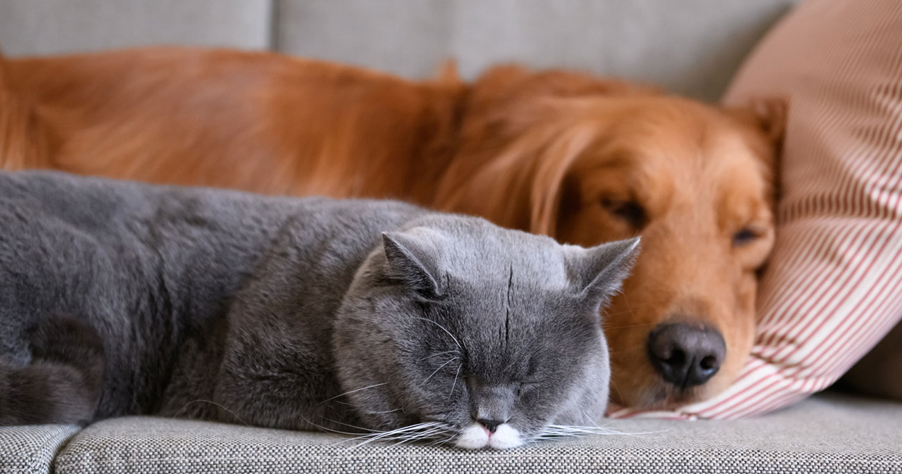 「何だか気持ちいい…」という人、続々!うつぶせになると、疲れが取れるのはなぜ?