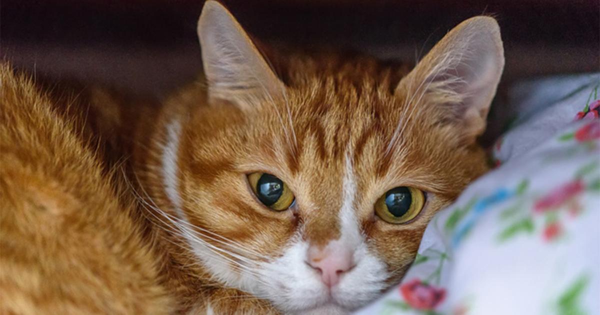 猫飼いあるある!隣の家に迷い込み、クローゼットに飛び込んだ猫