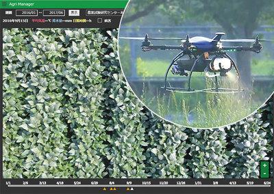 虫食いの葉を探すオプティムの映像解析技術