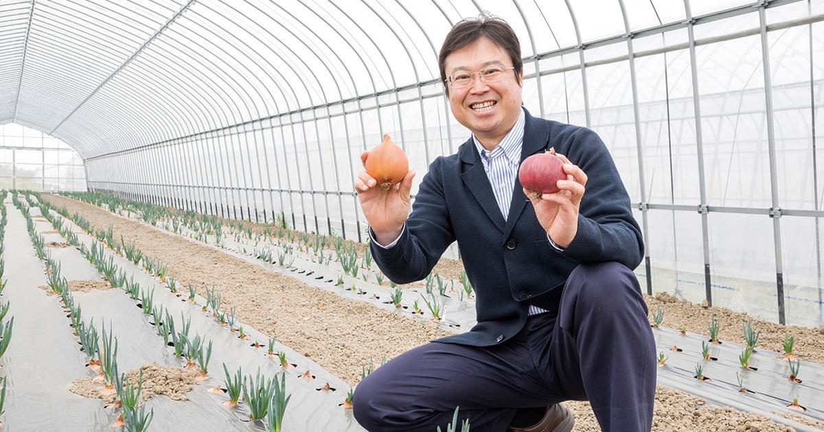 価格2倍でも売れる「玉ねぎ博士」の新品種、三井物産も提携