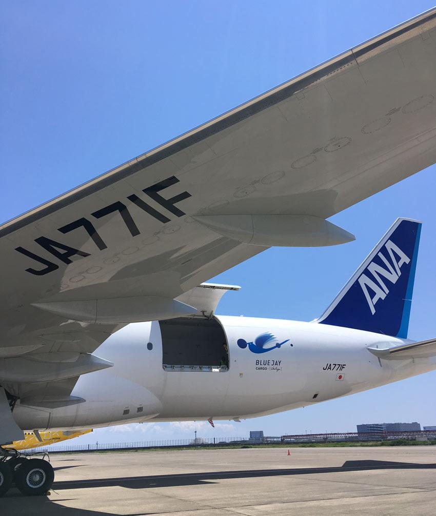 ANAのB777貨物専用機、愛称は「BLUE JAY」。北米に生息する青い翼の鳥(日本名アオカケス)が由来だ。着陸