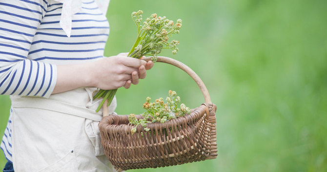 GWは山菜の最盛期