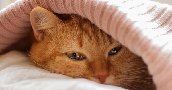 フランスでベストセラー! 世界22ヵ国で翻訳!猫がよく○○しているのは、ストレスを上手くやり過ごすためだった!