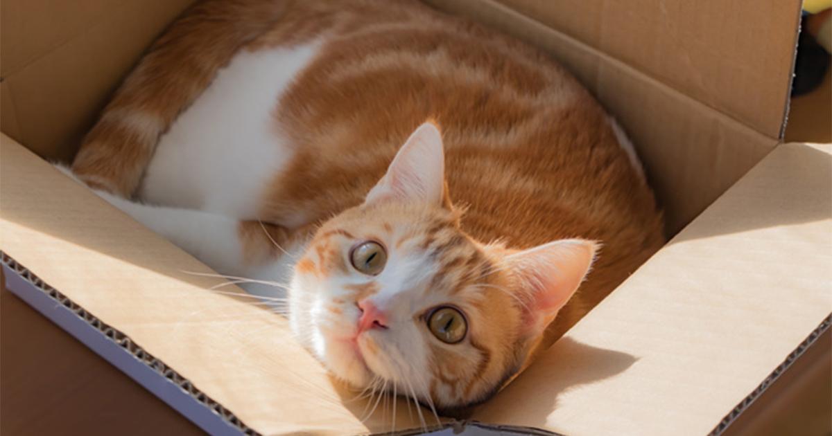 猫飼いあるある!猫いわく「人生を豊かにするものは、たいていタダである」