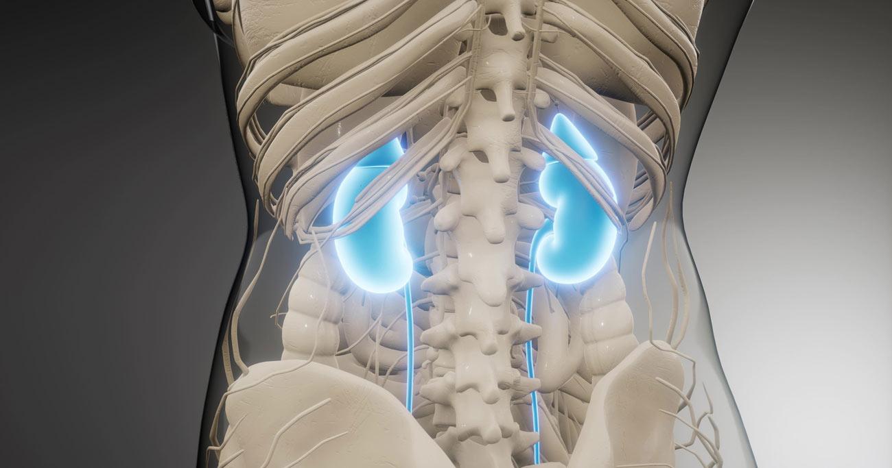 人工透析になるか、ならないかの違いは? 腎機能が急速に落ちていく慢性腎臓病