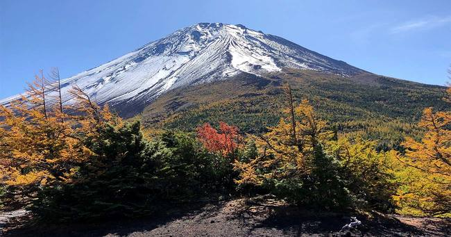 紅葉と初冠雪の富士山のコラボ