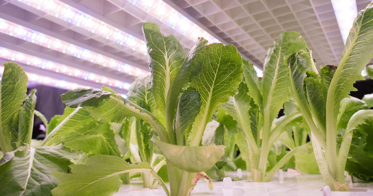 セブンの「野菜工場」で見えた、コンビニが「ユニクロ」になる日