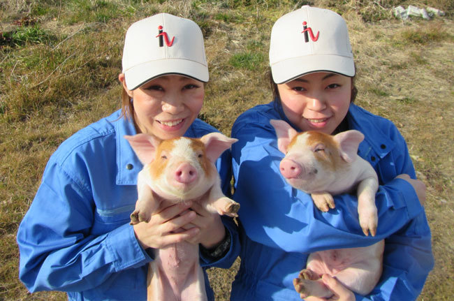 豚肉の生産・販売を行う株式会社ヒラノでは、HRテックを導入して良い豚を育て経営改善に成功している