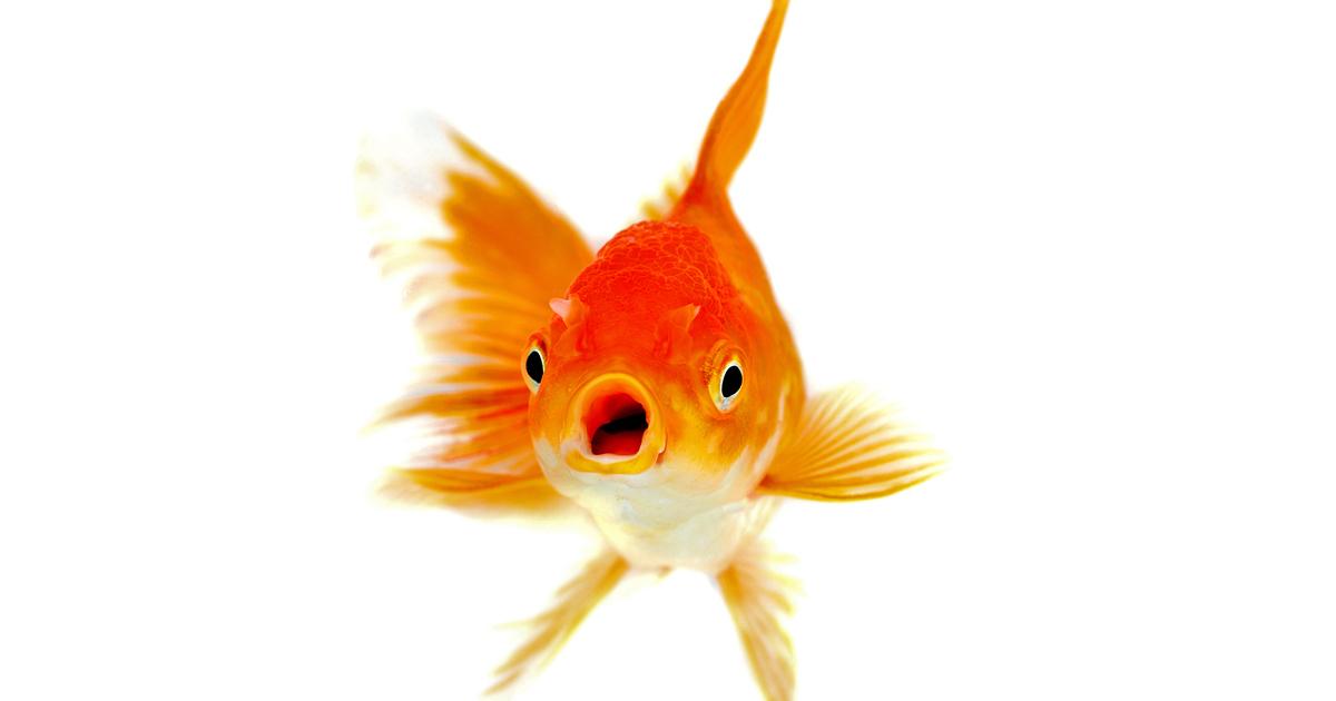現代人の集中力持続は金魚以下!IT進化で激減