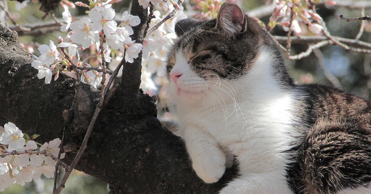 「春眠暁を覚えず」は国家への反骨の詩だった?