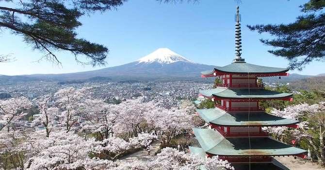 満開の桜と五重塔と富士山