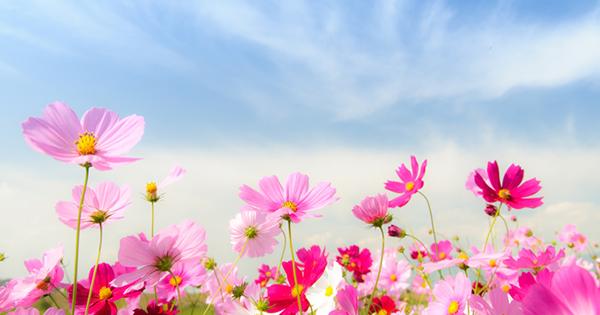 誰も教えてくれなかった!強運を呼ぶ「春夏秋冬」×「因縁果報」の法則