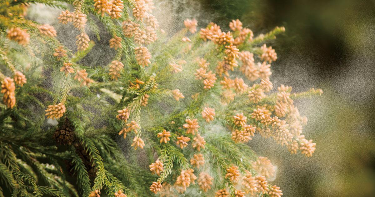 花粉症患者ガッカリ、舌下錠免疫療法薬が発売先送りの理由