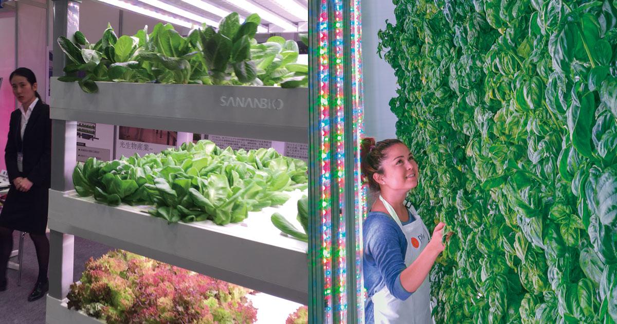 「野菜工場」で先行する日系企業を米中の新興勢力が猛追の行方