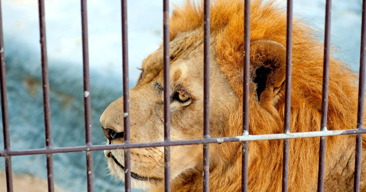 動物たち受難の春、ペット・動物園をめぐる事件が多発