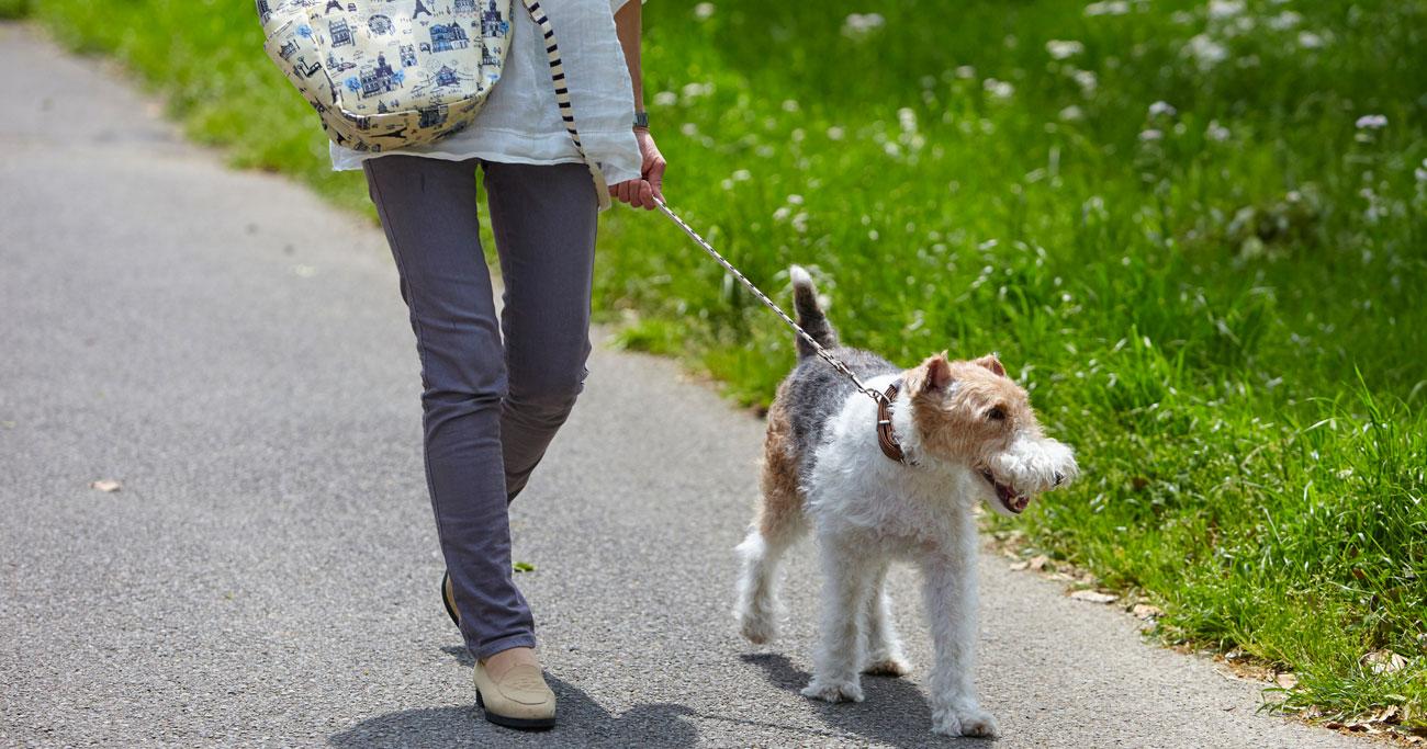 犬を飼うことは心臓や血管の健康につながる可能性