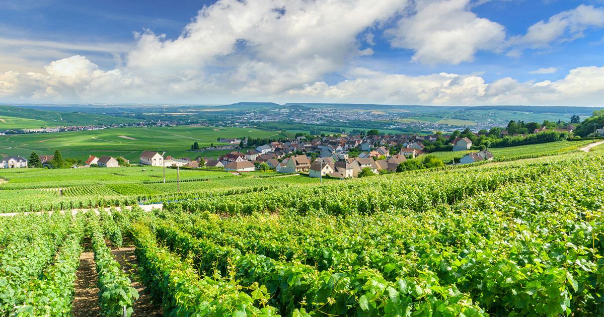 【教養としてのワイン】「シャンパン」のありがたみが倍増!? シャンパン醸造の驚くべき舞台裏