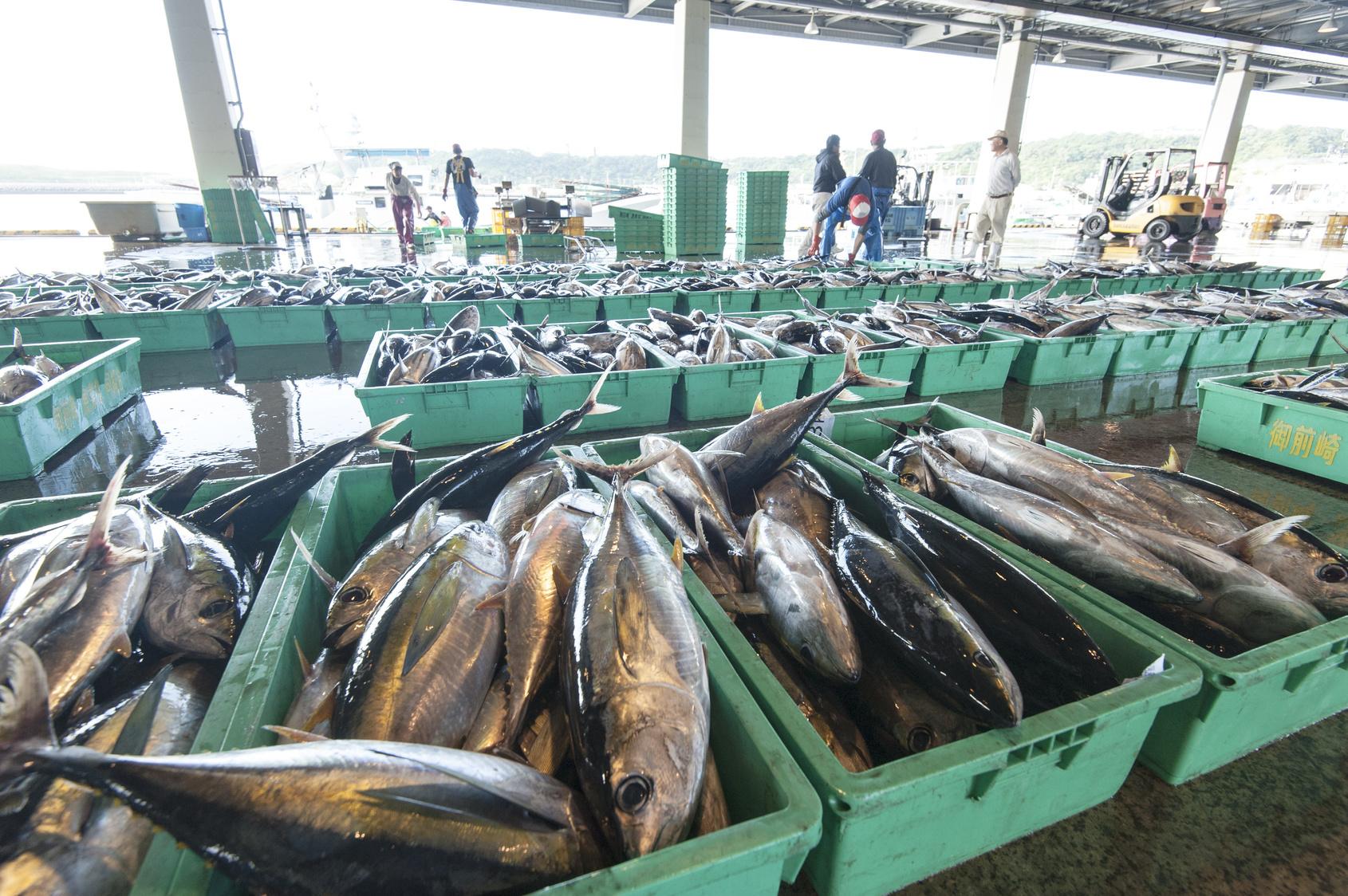 経済は「魚」で動く!?この50年で5倍に増えた「魚の消費量」