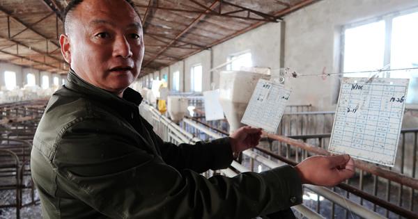 中国養豚業に激震、環境対策強化で閉鎖迫られる農家