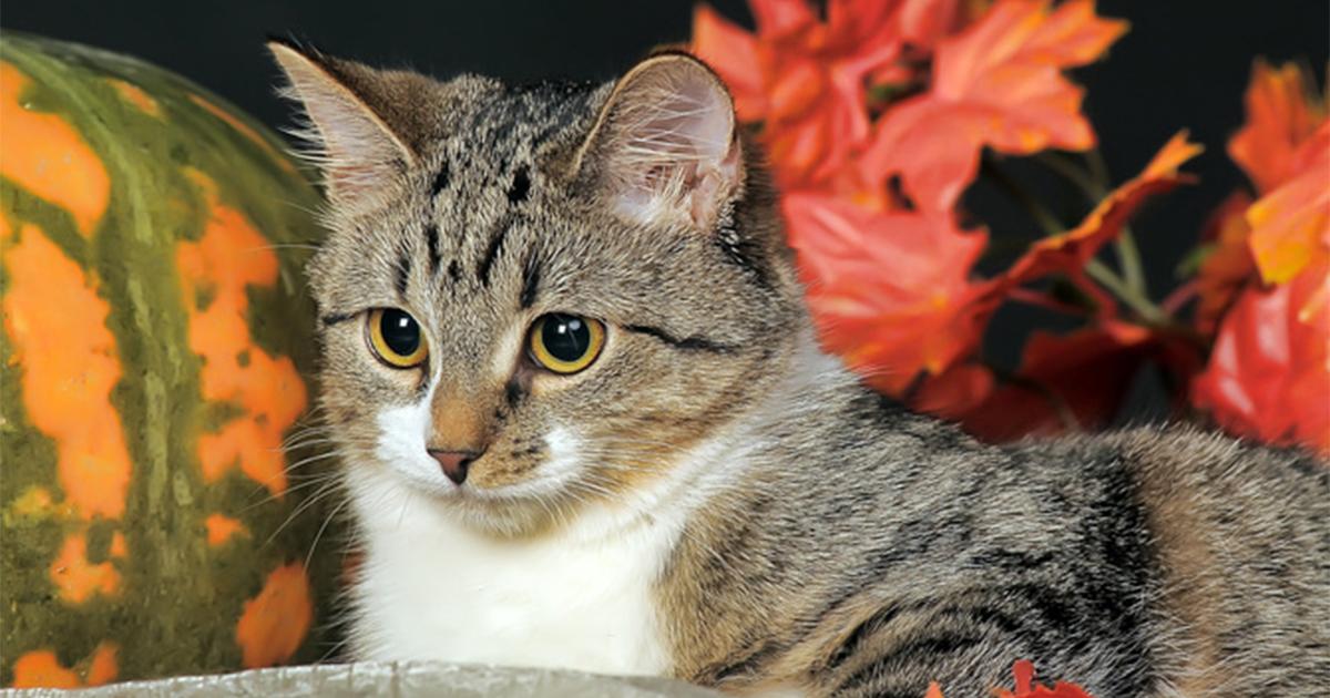 保護猫は、なぜかキュウリが大好物。今は幸せに暮らす猫の、何ともせつないその理由