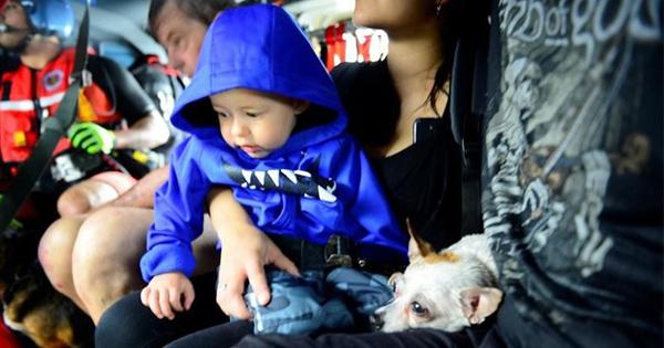 ペット残しての避難拒否、ハリケーン被害の米住民
