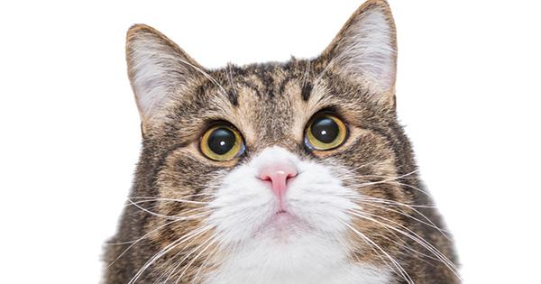 フランスでベストセラー!世界22ヵ国で翻訳!猫は理解している、いつだって堂々と頼み事をしたほうがいい理由とは?