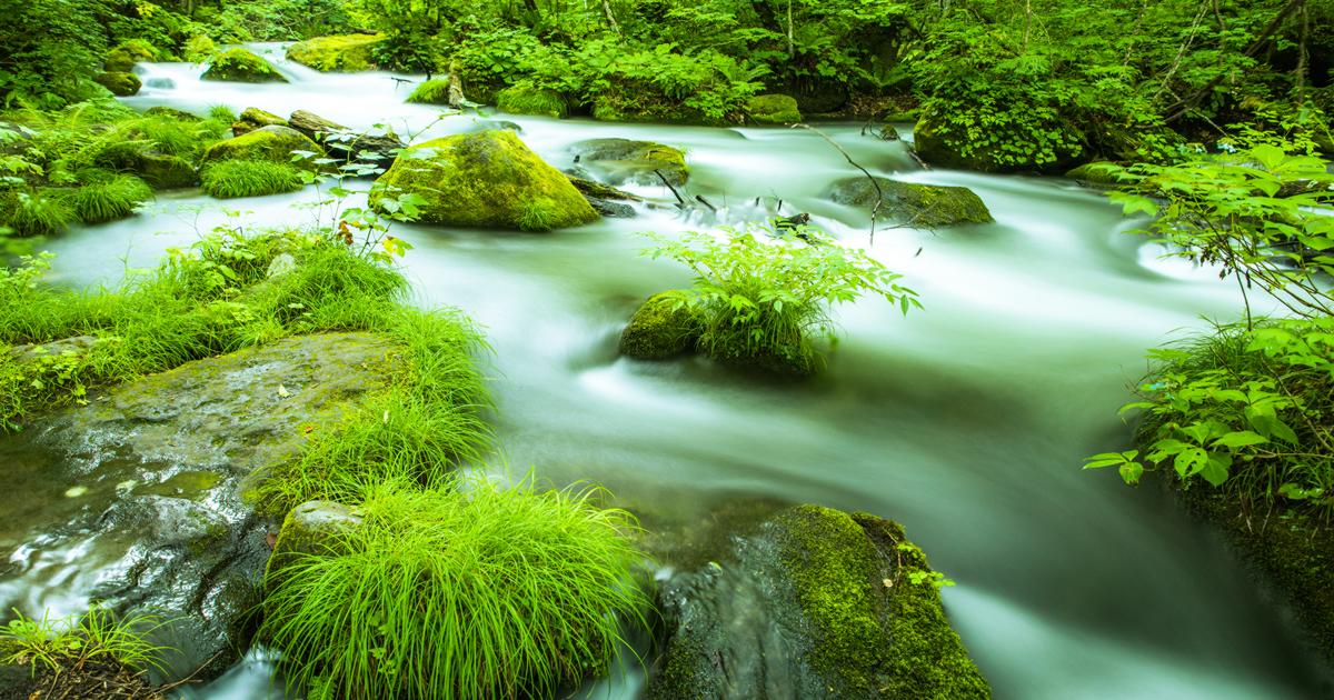 「日本人は世界一自然環境を重視」世界価値観調査を読み解く