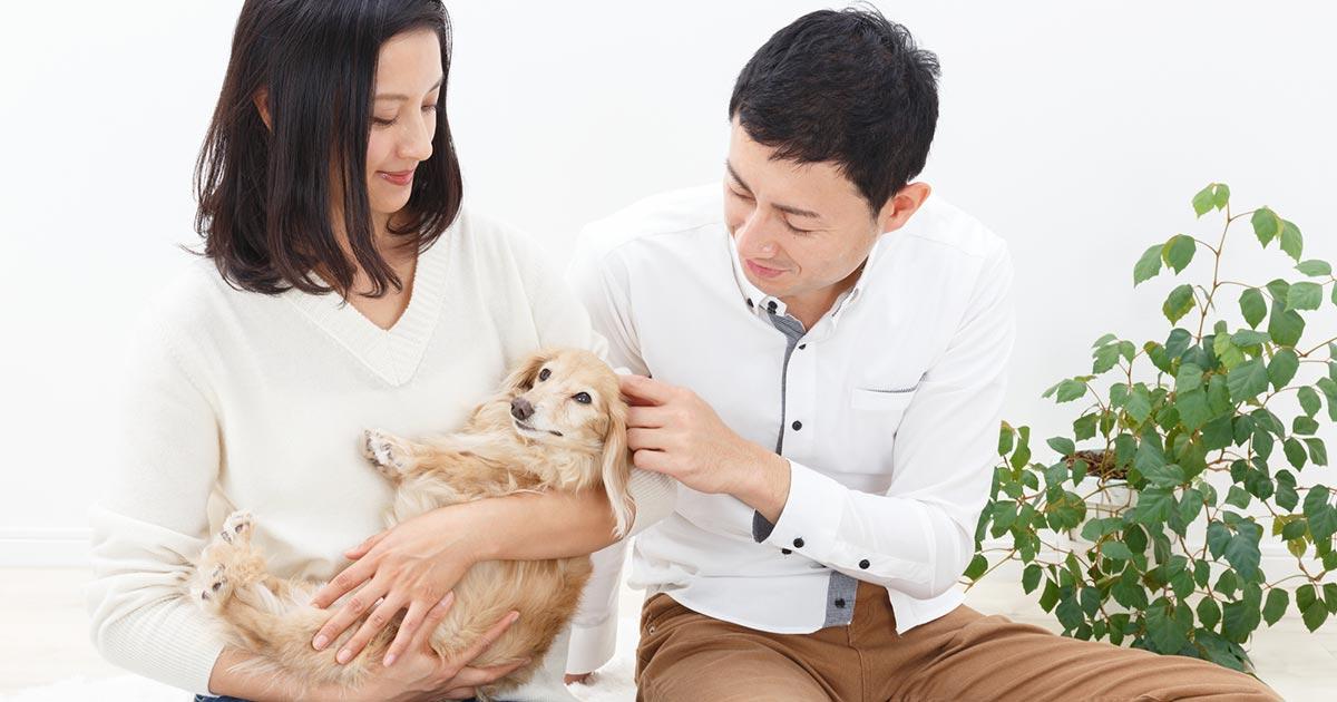 愛犬を「人質」に離婚応じぬ妻、夫婦の確執に巻き込まれるペットの悲哀(下)