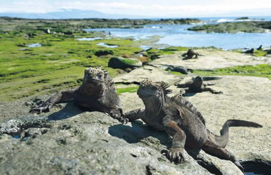 ガラパゴス諸島の画像 p1_27
