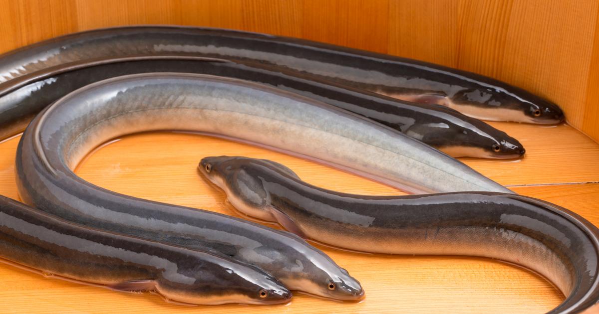 輸入魚の36%が「密漁品」の衝撃、北朝鮮や犯罪集団も関与
