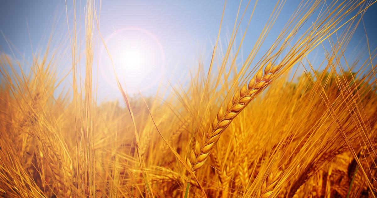 「昆虫食」は栄養価の高さで食料資源不足を救うか