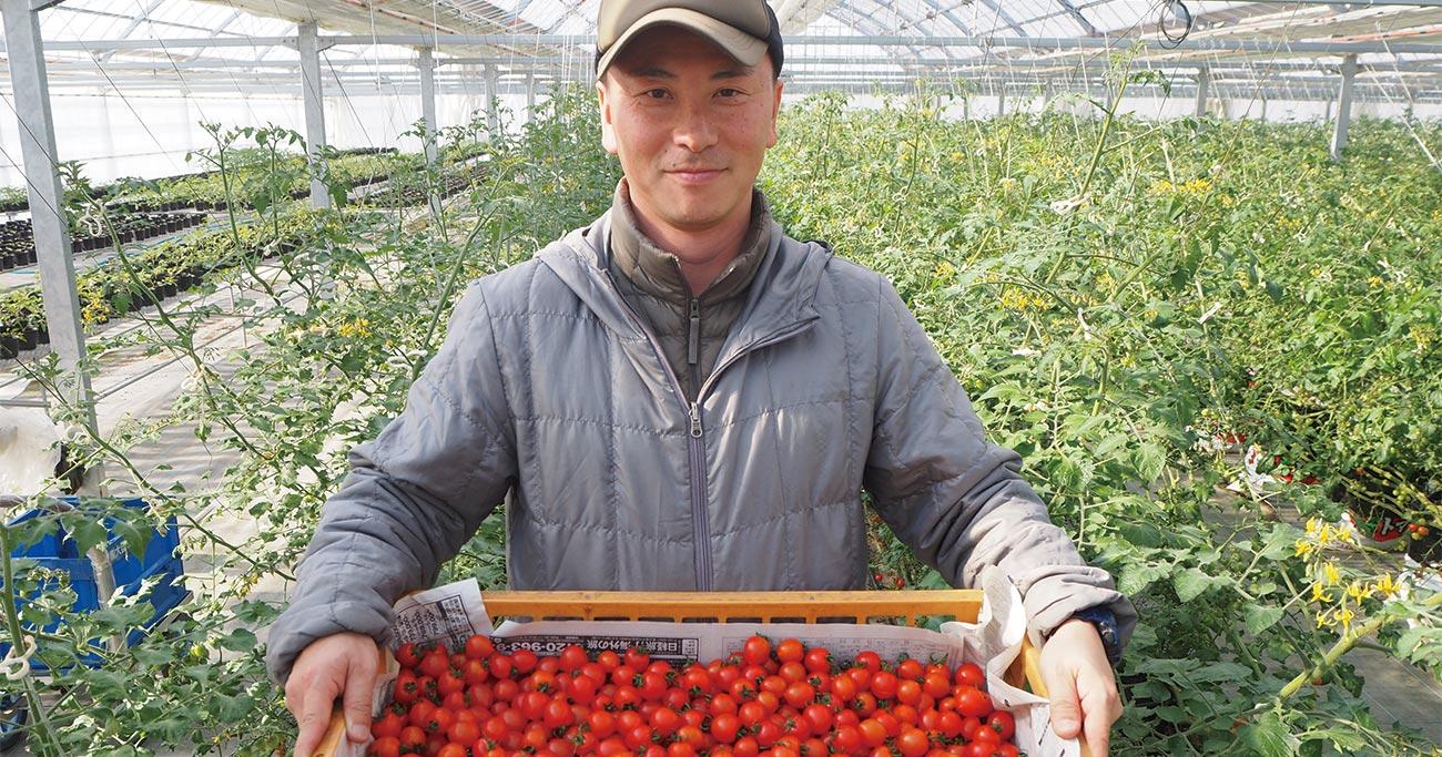 小規模でも儲かる農家への道(3)1haで3500万円の売上を支えるトマトの秘密